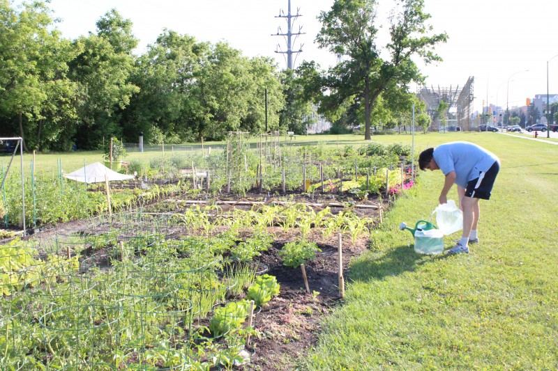New Community Garden Highlights Infrastructure Issues Community News Commons