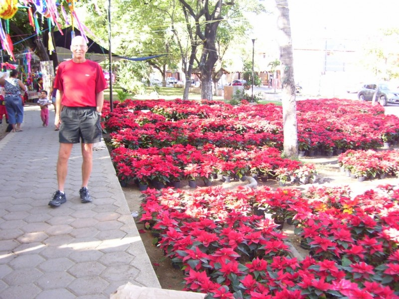 The sidewalks in this part of Mexico are teeming with poinsettias.