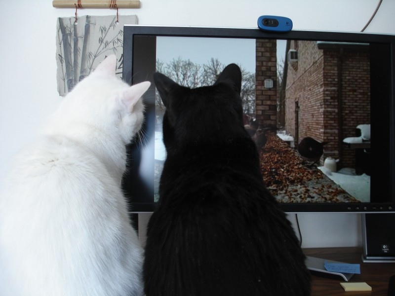 The cats watched online videos of birds one winter, but they soon realized the birds were fake.