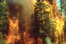 Province's policy of 'let it burn' fuels worsening fire situation