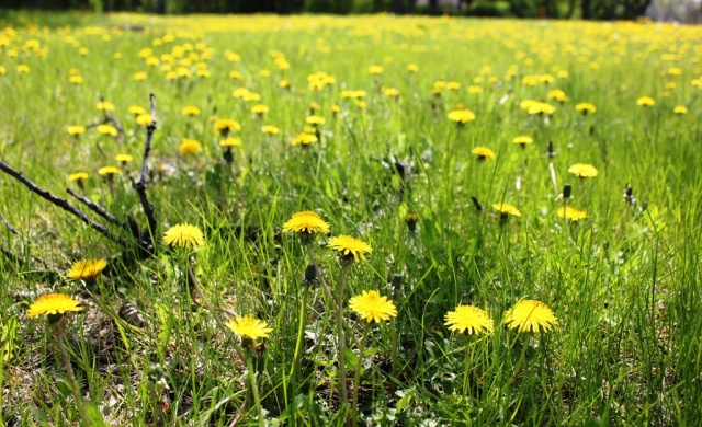 Learning how to care for lawns without using chemicals is one of many programs offered by Manitoba Eco-Network. PHOTO: Greg Petzold