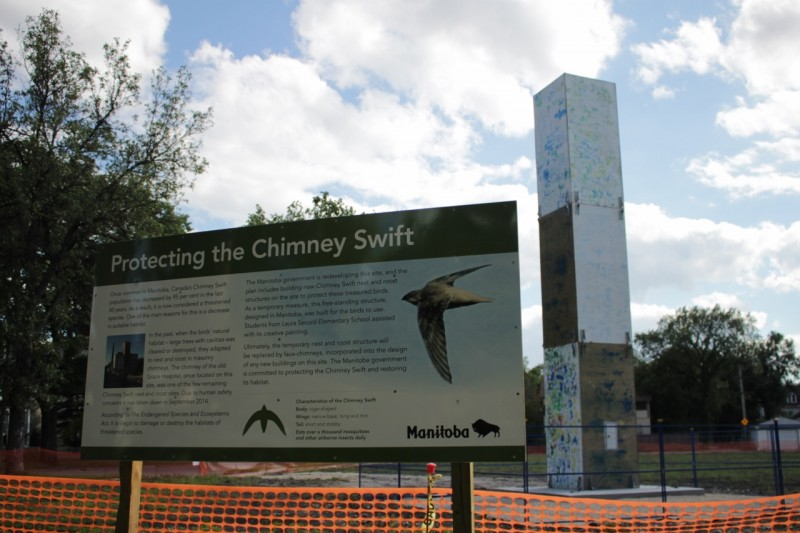 Are people with sensitivity to chemicals in the environment the proverbial canaries in a coal mine? Or similar to the endangered Chimney Swift?