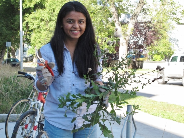 Student Arpi Patel collects plant samples.