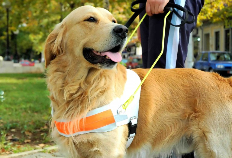 A service dog is just one of many examples of tax deductible medical expenses.