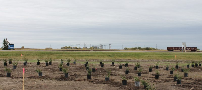 This tree planting is part of a CN EcoConnexions grant to the Rivers Train Station Restoration Committee on Sept. 23, 2016. /CHRISTIAN CASSIDY
