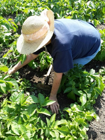 """Back to her roots: Dorothy LeBlanc grows fresh produce in her northern Manitoba garden to offset high costs of food. """"I grew up playing in the dirt and I still enjoy playing in the dirt,"""" she says. PHOTO by Marie LeBlanc"""