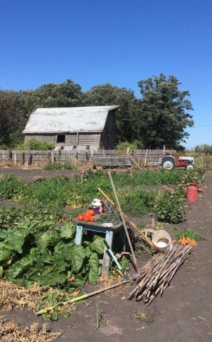 A bountiful scene from a very large garden just outside of Portage la Prairie. It's a busy time for gardeners as many are working hard to preserve and share their harvest. PHOTO by Melanie Ferris