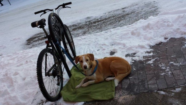 A blanket for a best friend.<br /><em>Submitted by M. LeBlanc</em>