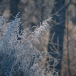 Frosty morning.<br /><em>Submitted by Terri Chick-Gall</em>
