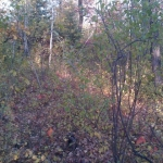 Autumn in the forest.<br /><em>Submitted by Noah Erenberg</em>