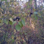 Autumn berries.<br /><em>Submitted by Noah Erenberg</em>