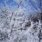 Frosty day.<br /><em>Submitted by Noah Erenberg</em>