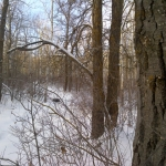Snowy forest.<br /><em>Submitted by Noah Erenberg</em>