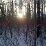 Winter sun.<br /><em>Submitted by Noah Erenberg</em>