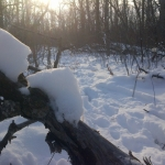 Winter sleep.<br /><em>Submitted by Noah Erenberg</em>