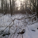 Forest calm.<br /><em>Submitted by Noah Erenberg</em>