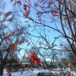 Hope in winter.<br /><em>Submitted by Sangeetha Nair</em>