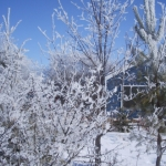Frosty tree.<br /><em>Submitted by Noah Erenberg</em>