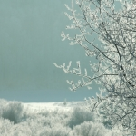 Icy morning.<br /><em>Submitted by Terri Chick-Gall</em>