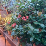 Greenhouse sanctuary.<br /><em>Submitted by Noah Erenberg</em>