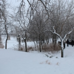 Winnipeg`s winter wonderland.<br /><em>Submitted by Noah Erenberg</em>