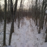 Forest path.<br /><em>Submitted by Noah Erenberg</em>