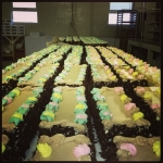 Rows of Jeanne's cakes.<br /><em>Submitted by Stan Mak</em>
