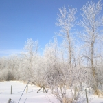 Frosty trees under blue sky.<br /><em>Submitted by Noah Erenberg</em>