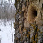Winter home.<br /><em>Submitted by Noah Erenberg</em>