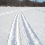 Making tracks.<br /><em>Submitted by Taya Rtichsheva</em>