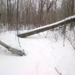 Fallen trees in snowy forest.<br /><em>Submitted by Noah Erenberg</em>