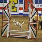 Dog show at Royal Manitoba Winter Fair.<br /><em>Submitted by Linda Walker</em>
