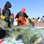 Full nets on Lake Winnipeg.<br /><em>Submitted by Noah Erenberg</em>
