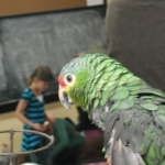 Parrot on his perch.<br /><em>Submitted by Noah Erenberg</em>