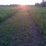 Sunset path.<br /><em>Submitted by Noah Erenberg</em>