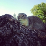 Prairie Dog at Assiniboine Park<br /><em>Submitted by Jay Booth</em>