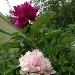 Pink and more pink.<br /><em>Submitted by Noah Erenberg</em>