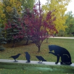 A cat, three birds and fall colours.<br /><em>Submitted by LuAnn Lovlin</em>
