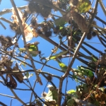 Blue sky through tree covered shelter.<br /><em>Submitted by Elaine Pelley</em>