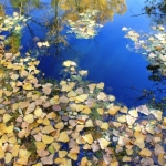 Autumn leaves on pond.<br /><em>Submitted by Greg Petzold</em>