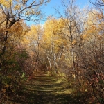 Dog walking at Little Mountain Park.<br /><em>Submitted by Jan Leah Smiith</em>