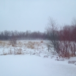 Snow and blowing snow.<br /><em>Submitted by Bee Erenberg</em>