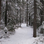 Footprints in the snow.<br /><em>Submitted by M. LeBlanc</em>