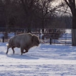 Blizzard enjoys the weather.<br /><em>Submitted by Stan Solo</em>