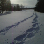 Snowshoe tracks.<br /><em>Submitted by Noah Erenberg</em>