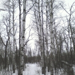 All quiet in the snowy forest.<br /><em>Submitted by Noah Erenberg</em>