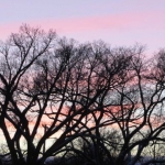 Trees in pink clouds.<br /><em>Submitted by M. LeBlanc</em>