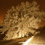 Hoarfrost heaven.<br /><em>Submitted by Doug Kretchmer</em>