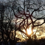 Big old tree against big beautiful sky.<br /><em>Submitted by Marie LeBlanc</em>