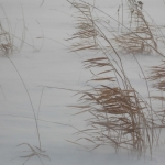 Prairie winds.<br /><em>Submitted by Paul Nielsen</em>